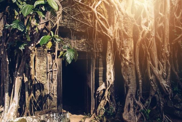"""Rễ cây cổ thụ vặn xoắn như trăn khổng lồ muốn """"nuốt chửng"""" ngôi đền - 2"""
