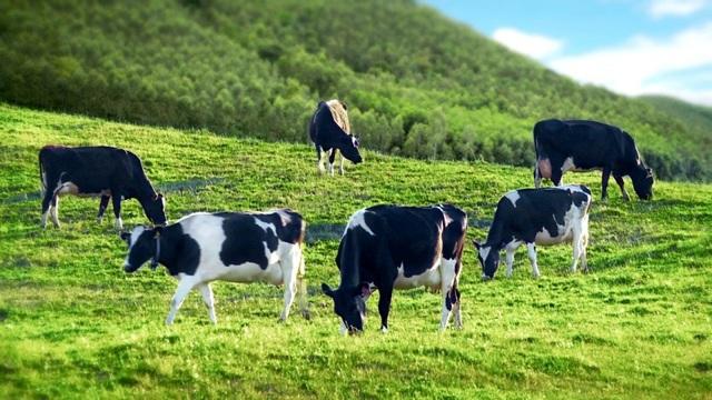 Sữa tươi ít đường Mộc Châu Milk: Sản phẩm chất lượng từ công ty trên 60 năm lịch sử - 1