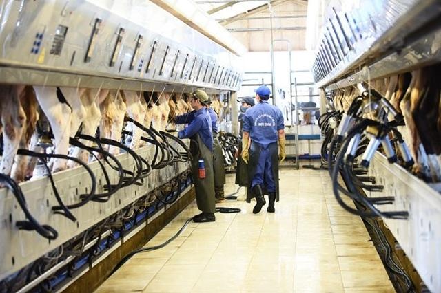 Sữa tươi ít đường Mộc Châu Milk: Sản phẩm chất lượng từ công ty trên 60 năm lịch sử - 2