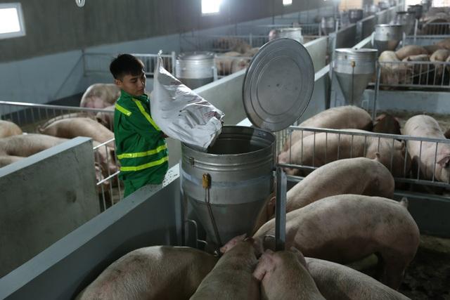 Dịch tả lợn châu Phi hoành hành, cuối năm có lo thiếu thịt lợn? - 2