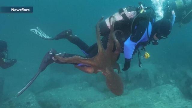 Bạch tuộc khổng lồ tấn công và cắn người bằng mỏ nhọn - 2