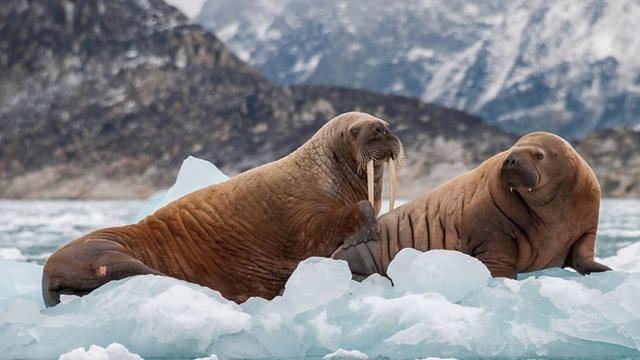 Đảo quốc Greenland mất hơn 2 tỷ tấn băng chỉ trong một ngày - 1