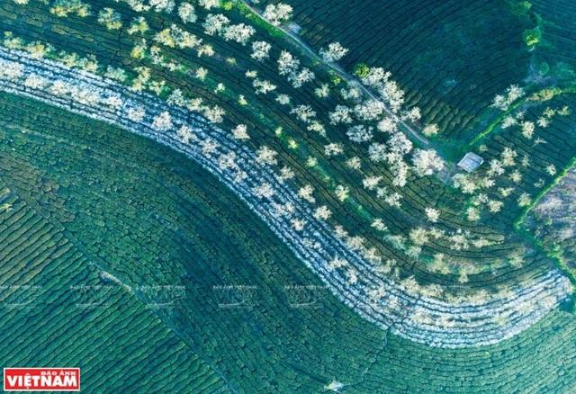 Phong cảnh Việt Nam - những bức hình tuyệt đẹp nhìn từ trên cao - 12