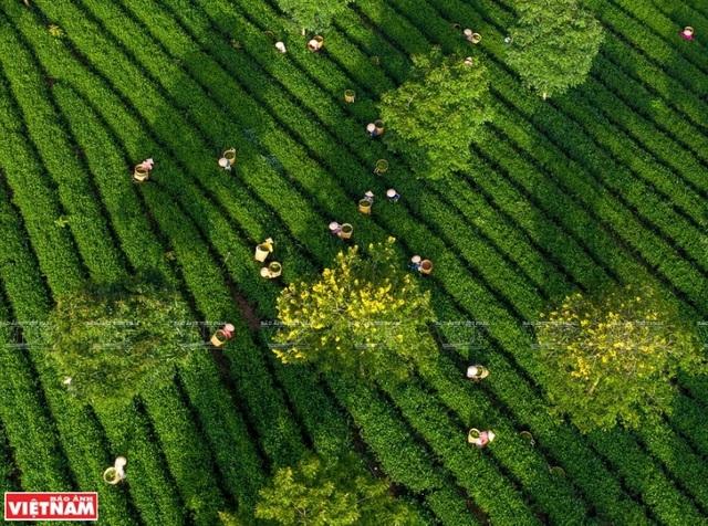 Phong cảnh Việt Nam - những bức hình tuyệt đẹp nhìn từ trên cao - 4