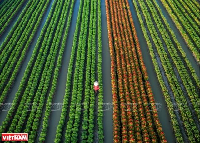 Phong cảnh Việt Nam - những bức hình tuyệt đẹp nhìn từ trên cao - 6
