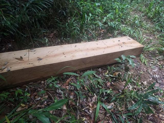 """Cận cảnh cánh rừng Kbang bị tàn phá """"ngổn ngang""""! - 7"""
