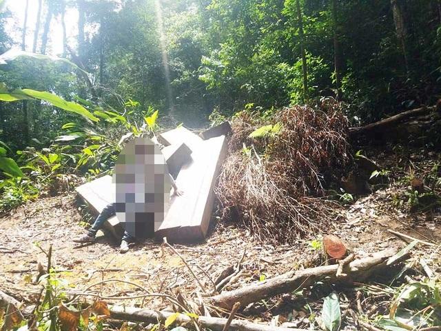 """Cận cảnh cánh rừng Kbang bị tàn phá """"ngổn ngang""""! - 5"""