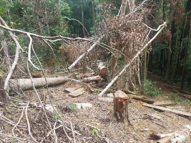 """Cận cảnh cánh rừng Kbang bị tàn phá """"ngổn ngang""""! - 2"""