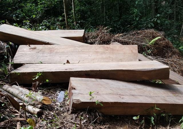 """Cận cảnh cánh rừng Kbang bị tàn phá """"ngổn ngang""""! - 4"""