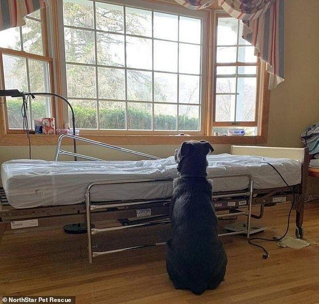 Cảm động bức ảnh chú chó kiên nhẫn ngồi chờ bên giường bệnh người chủ quá cố - 1