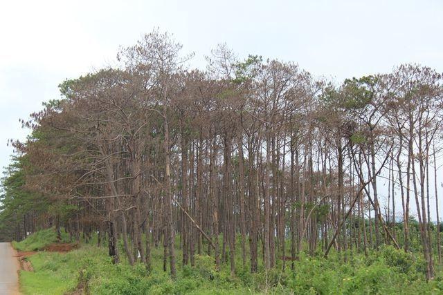 Tỉnh Đắk Nông hô hào bảo vệ rừng - 1