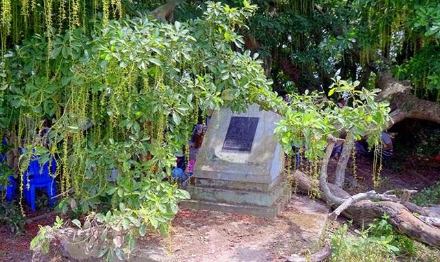 Gò lộc vừng ngàn năm tuổi độc nhất vô nhị ở Việt Nam - 1