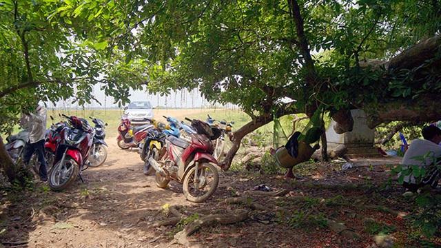 Gò lộc vừng ngàn năm tuổi độc nhất vô nhị ở Việt Nam - 3