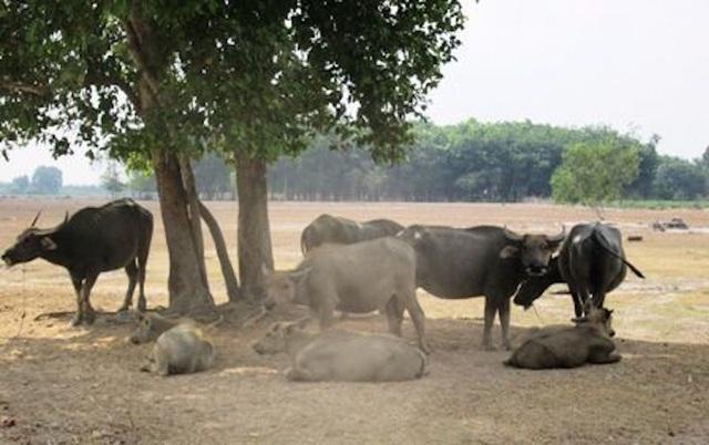 Công viên Sài Gòn Safari: UBND TPHCM giao chủ đầu tư không đủ năng lực? - 1