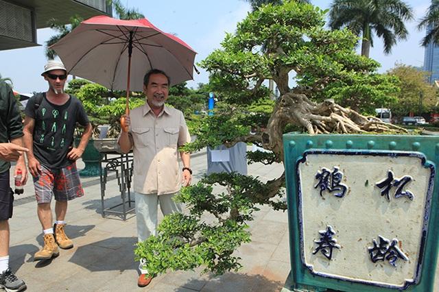 Siêu phẩm nguyệt quế cổ thụ dáng thác đổ đẹp nhất Việt Nam có giá tiền tỷ - 3