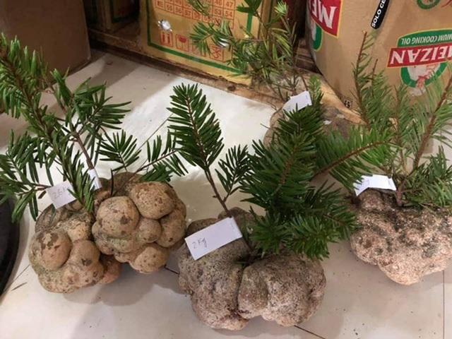 Vì sao một cây nấm giá 10 triệu đồng, người Việt vẫn đổ tiền mua? - 1