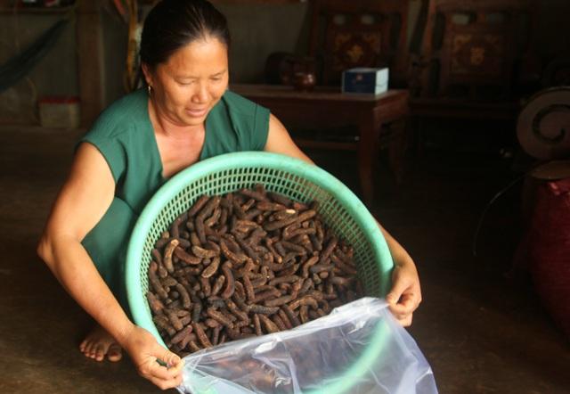 Nghề hái ra tiền khủng ở Đắk Nông: Săn chuối hột rừng đại bổ - 1
