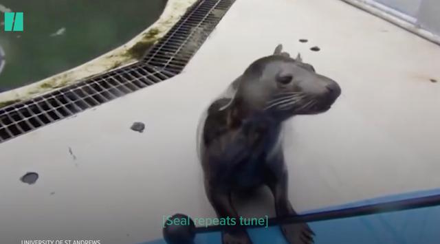 """Những chú hải cẩu biết hát """"Twinkle Little Star"""" - 1"""