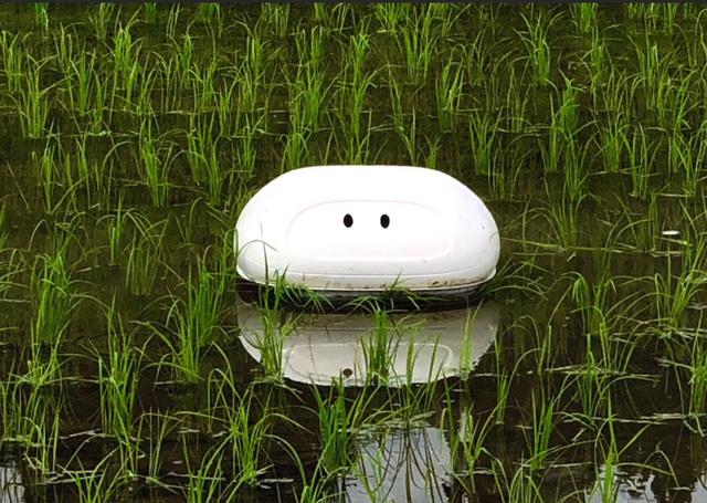 Người Nhật sáng chế robot làm việc ngoài ruộng lúa - 1