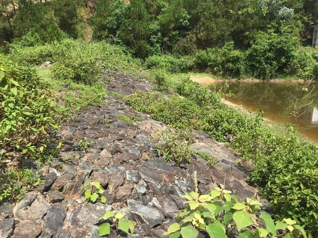 """Đập nước dự phòng chết mòn, rừng thông quanh khu di tích rơi vào """"báo động đỏ""""? - 3"""