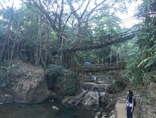 """""""Cây cầu sống"""" đan bằng rễ cây, tồn tại cả trăm năm vẫn dùng tốt - 3"""