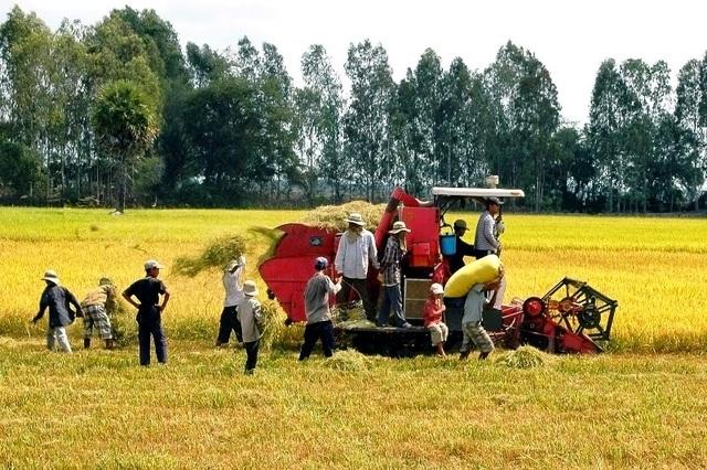 Trung Quốc giảm nhập, xuất khẩu gạo của Việt Nam trở nên khó khăn - 3