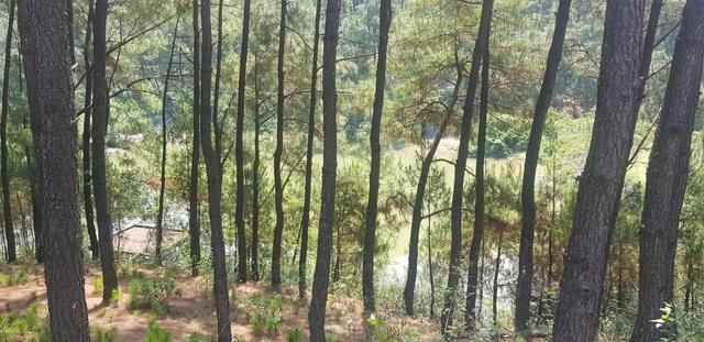 """Đập nước dự phòng chết mòn, rừng thông quanh khu di tích rơi vào """"báo động đỏ""""? - 12"""