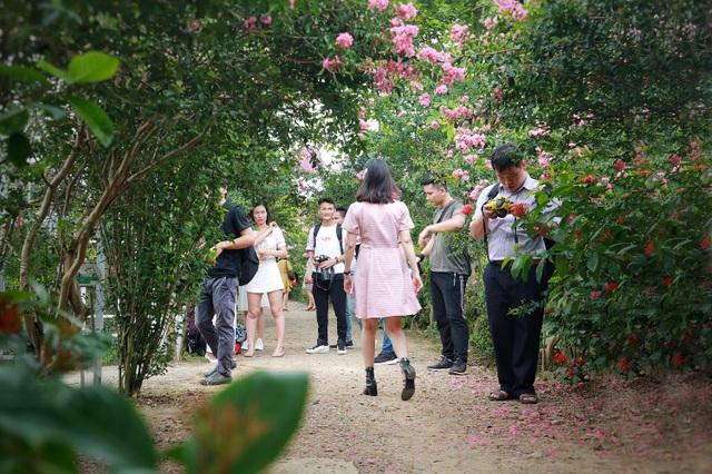 Phát sốt với con đường hoa tường vi đẹp như mơ ở Hà Nội - 9