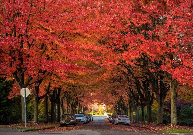 Bản tình ca mùa thu Bắc Mỹ - 4