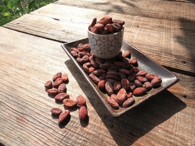 The Bitter Cacao và khát vọng nâng tầm giá trị hạt Cacao Việt Nam - 1