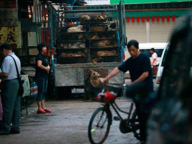 Hàng triệu người ký đơn đề nghị chấm dứt lễ hội thịt chó - 2