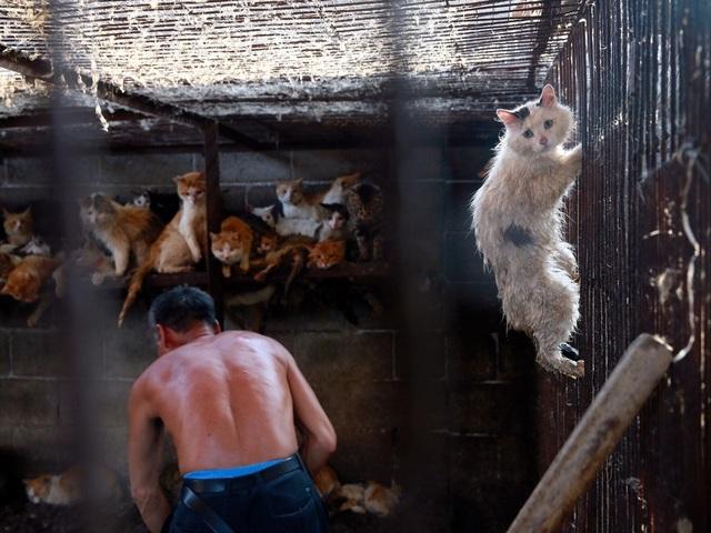 Hàng triệu người ký đơn đề nghị chấm dứt lễ hội thịt chó - 3
