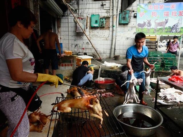 Hàng triệu người ký đơn đề nghị chấm dứt lễ hội thịt chó - 5