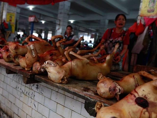 Hàng triệu người ký đơn đề nghị chấm dứt lễ hội thịt chó - 7