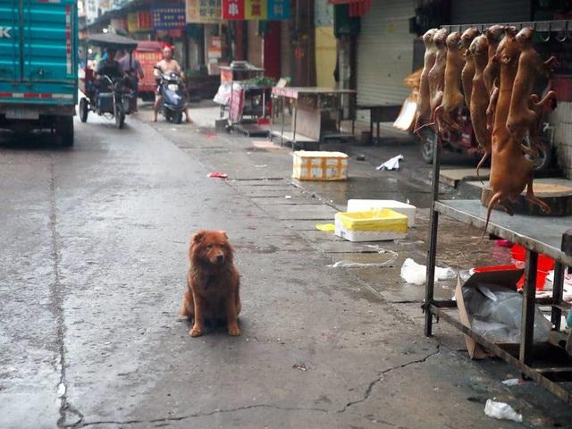 Hàng triệu người ký đơn đề nghị chấm dứt lễ hội thịt chó - 8