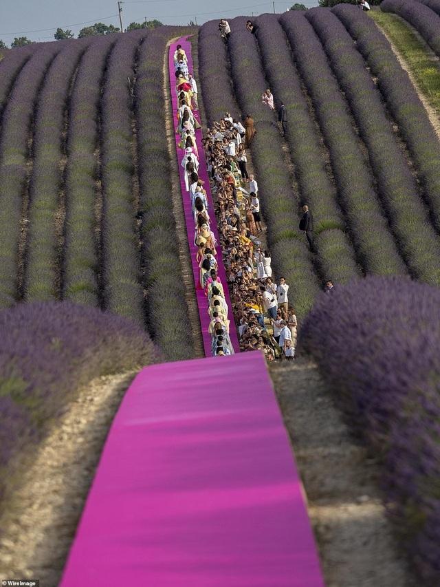 Xao xuyến trước sàn catwalk nằm giữa cánh đồng hoa oải hương - 4
