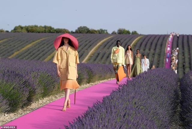 Xao xuyến trước sàn catwalk nằm giữa cánh đồng hoa oải hương - 5