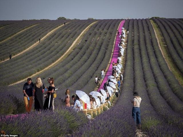 Xao xuyến trước sàn catwalk nằm giữa cánh đồng hoa oải hương - 8