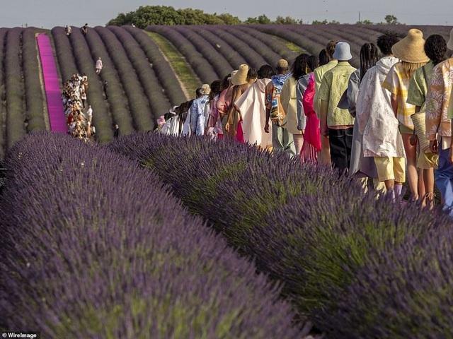 Xao xuyến trước sàn catwalk nằm giữa cánh đồng hoa oải hương - 9
