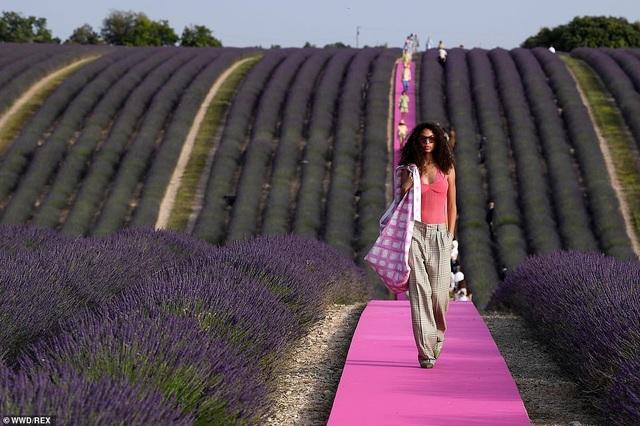 Xao xuyến trước sàn catwalk nằm giữa cánh đồng hoa oải hương - 10