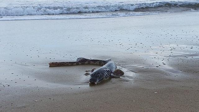 Sinh vật kỳ quái dạt vào bãi biển Úc - 2