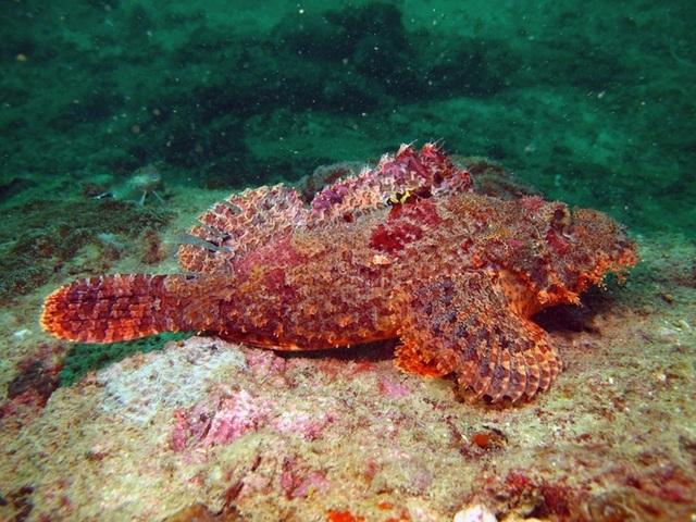 Loài cá xấu xí khiến thực khách kinh hãi nhưng lại là đặc sản ngon trứ danh - 2