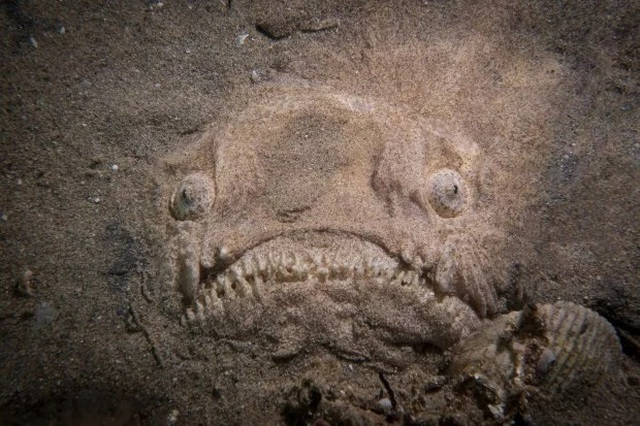 Đang lặn, người đàn ông phát hiện sinh vật kỳ dị như đến từ ngoài hành tinh - 1