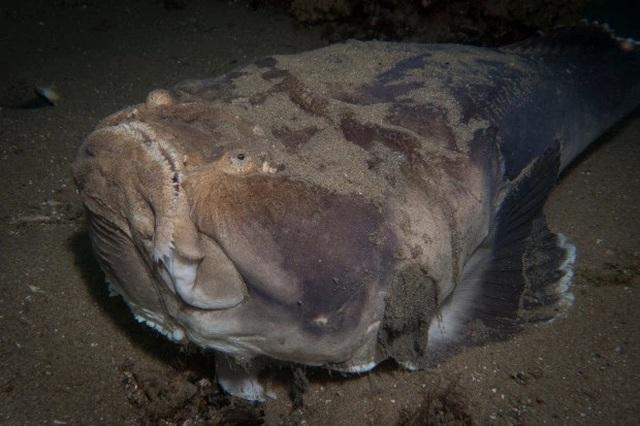 Đang lặn, người đàn ông phát hiện sinh vật kỳ dị như đến từ ngoài hành tinh - 3