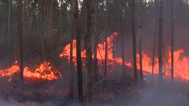Cháy rừng suốt 15 giờ, hàng trăm người đang nỗ lực ngăn đám cháy lan rộng - 5