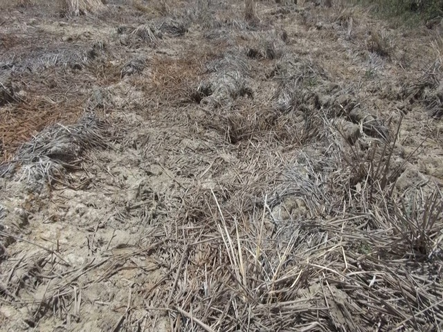 Miền Trung hạn hán kéo dài, đập cạn, người khát, ruộng khô - 6