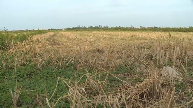 Miền Trung hạn hán kéo dài, đập cạn, người khát, ruộng khô - 11