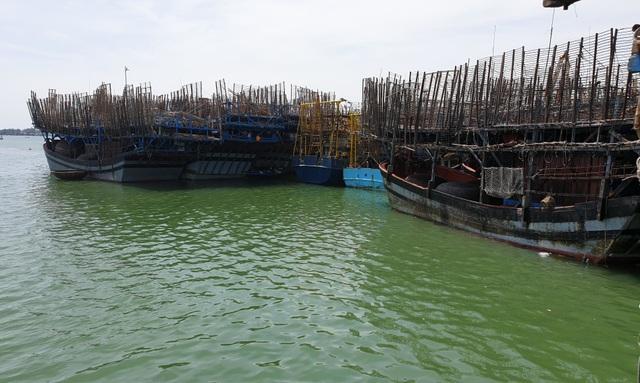 Hàng trăm tấn mực khô tồn kho của ngư dân Quảng Nam