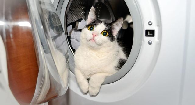 Chú mèo suýt chết vì bị quay hơn 30 phút... trong máy giặt - 2