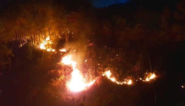 Hàng trăm người căng mình chữa cháy ở khu rừng cuồn cuộn lửa trong đêm - 1